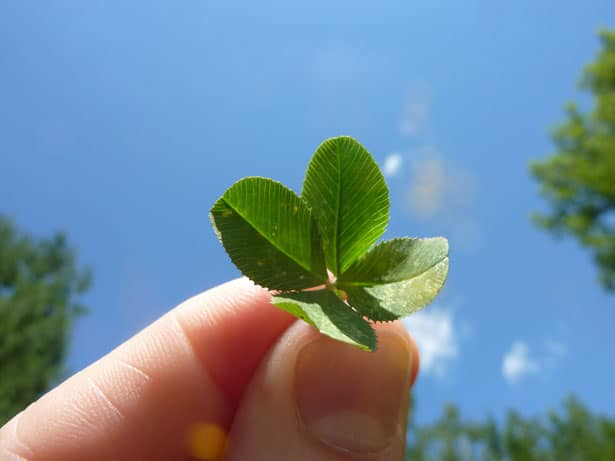 four leaf clover 1318889262wsA